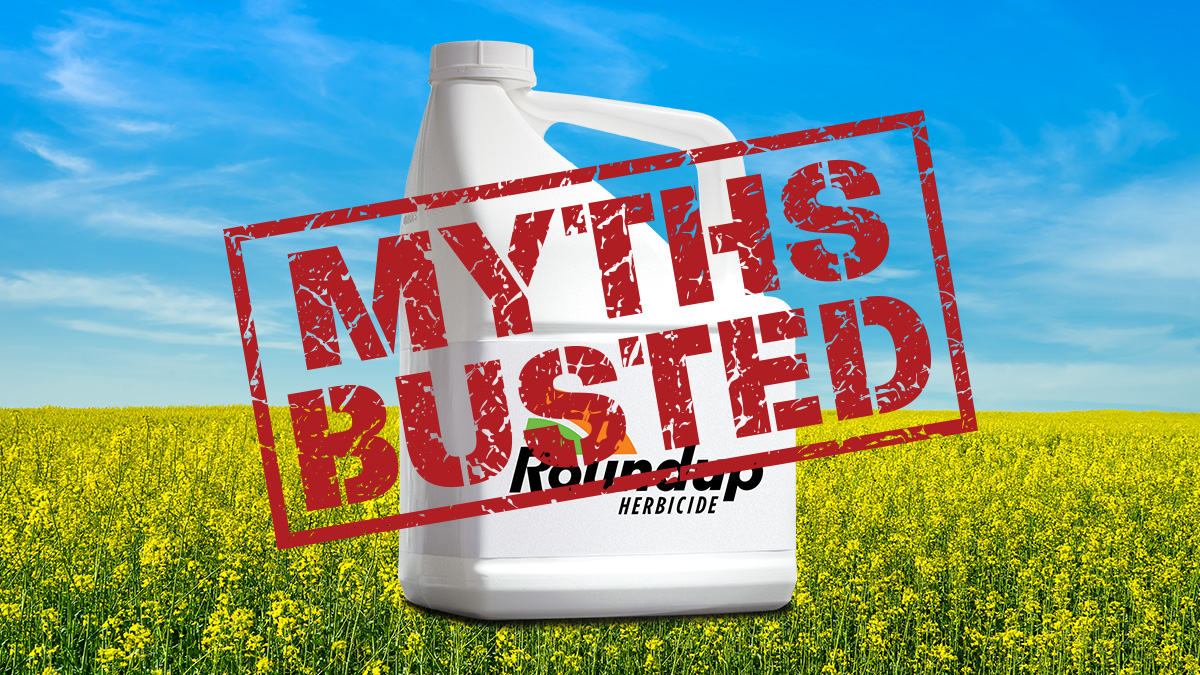 Graphic of Roundup Herbicide bottle with an overlay of Myths Busted.  With the background of a field of Canola