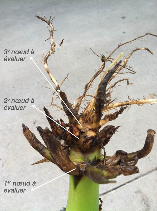 Root-Digs-Image_Figure-1C-FRE.png