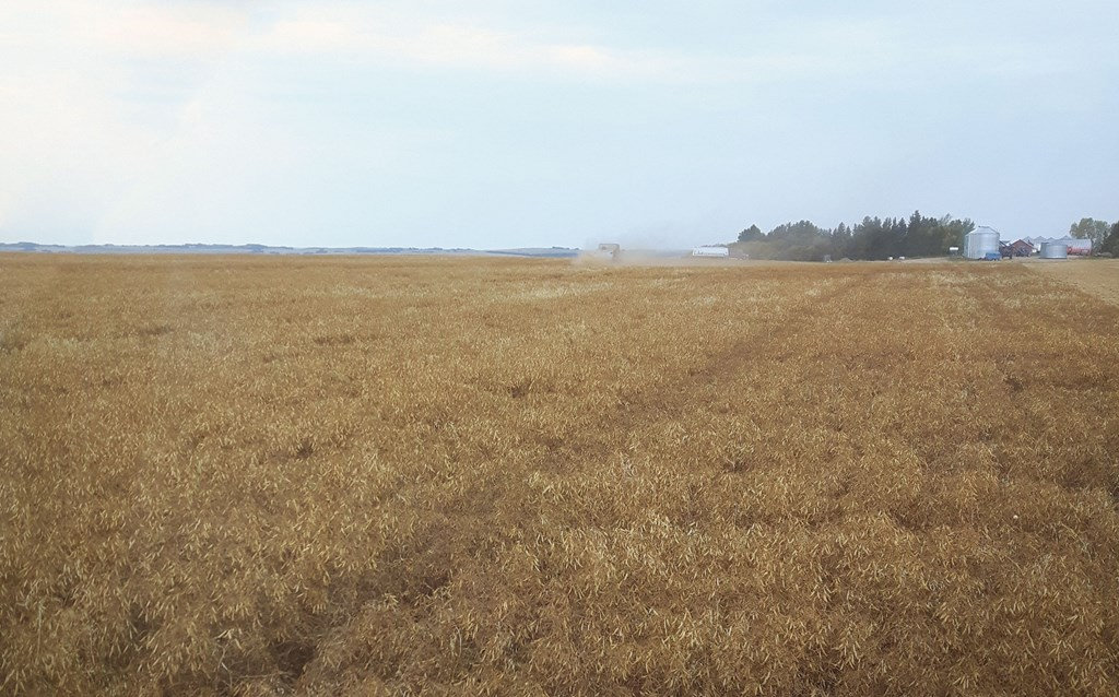 Wide open field, recently harvested.