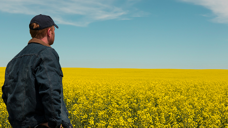 Man looking out over a canola field