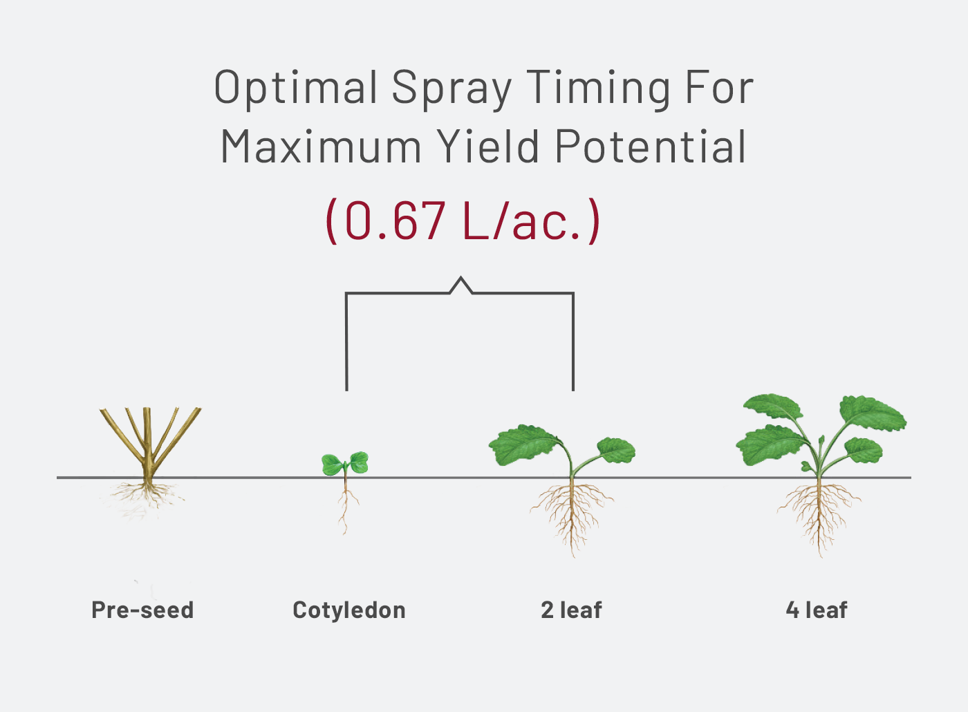 TruFlex Canola optimal spray timing chart