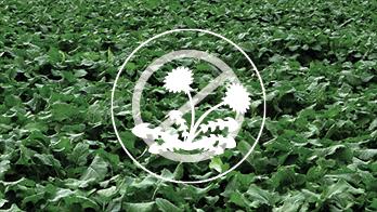 Control tough weeds decorative image