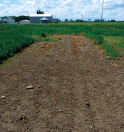 Field treated with Roundup® herbicide