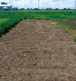 In this trial, the plot treated with an initial application of Liberty®150 SN herbicide followed by an application of Roundup®showed superior control of weeds. After the initial application of Liberty®150 SN, any weed regrowth was effectively controlled by the application of Roundup®.