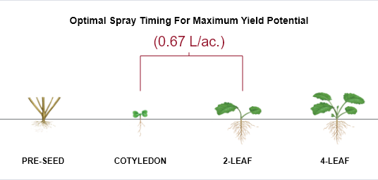 Illustration showing optimal spray timing for maximum yield potential. Shows four stages (pre-seed, cotyledon, 2-leaf and 4-leaf) with the optimal two stages (cotyledon and 2-leaf) as the best stages to treat at 0.67 L/ac..