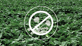 Improved control of tough weeds feature image