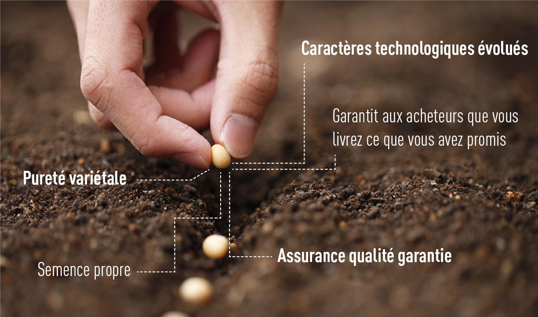 Pourquoi utiliser de la semence certifiée ?