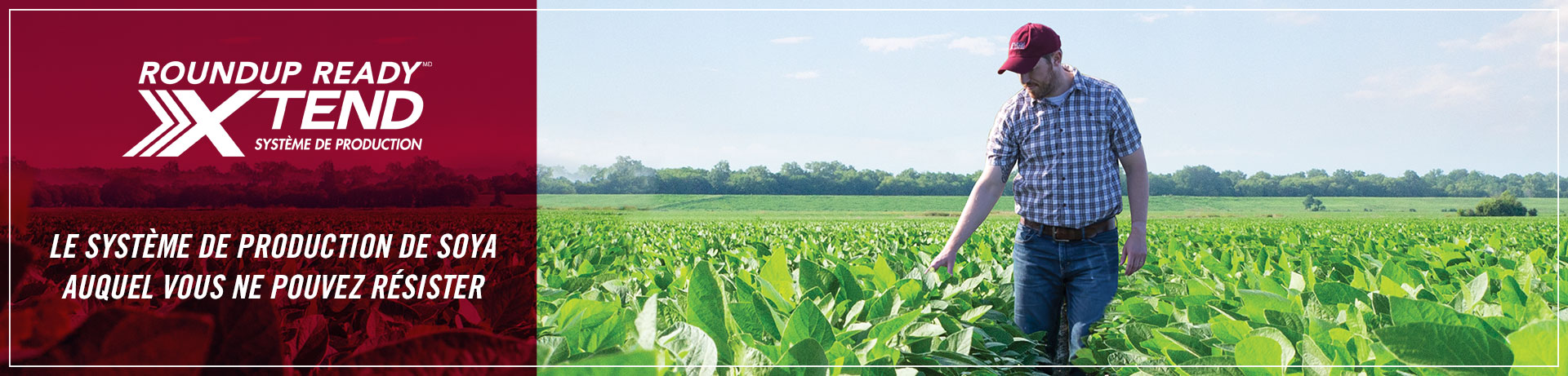 Roundup Ready Xtend Crop System - The soybean system you can't resist