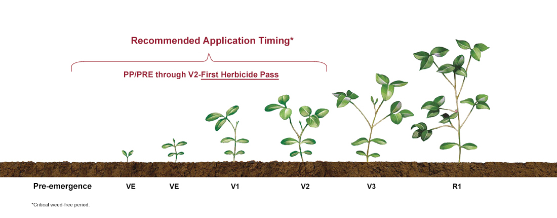 a visual example of soybean crop yield stages from Pre-emergence to VE, VE, V1, V2, V3, R1 and R3 with recommended product application timing from PP/PRE through V2-First Herbicide Pass
