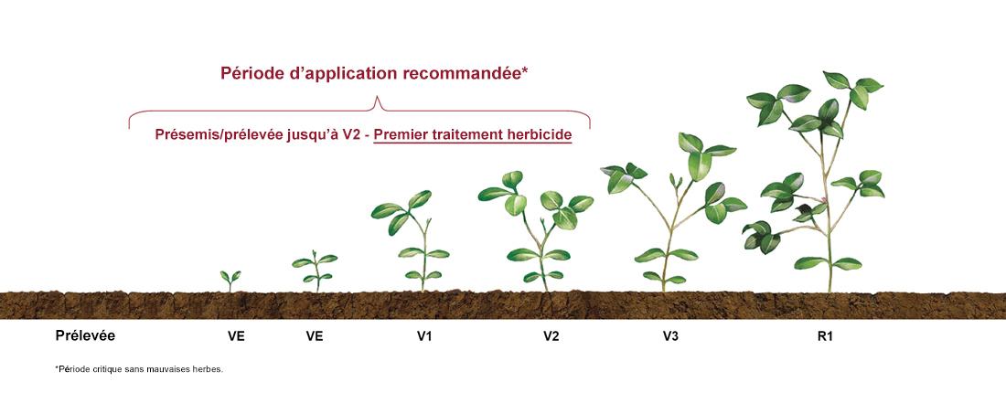 Illustration – un exemple visuel des stades de développement d'une culture de soya, de la prélevée jusqu'à VE, VE, V1, V2, V3, R1 et R3 avec période d'application recommandée des produits, de présemis/prélevée jusqu'à V2-premier traitement herbicide.