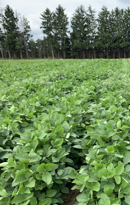 Roundup Xtend® herbicide with VaporGrip® Technology at 2 L/ac. applied PRE